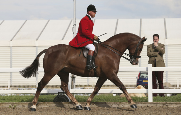 North of England summer horse show 05 07 2014