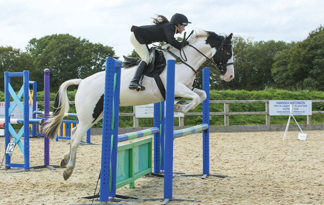 rehoming horses Bernard was rescued by the RSPCA four years ago and now enjoys showjumping
