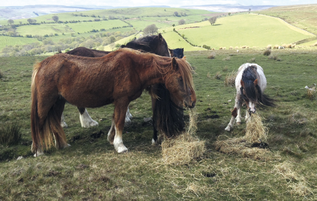 contraception for horses