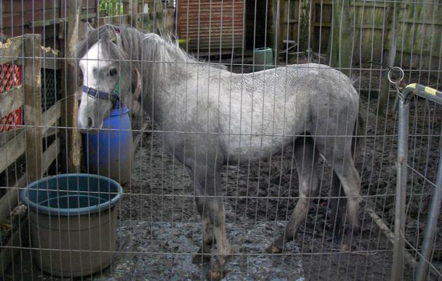 pony found starving