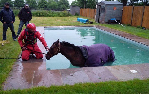 Escaped Pony Rescued From Swimming Pool Horse Hound