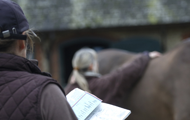 looking at a horse to buy vetting