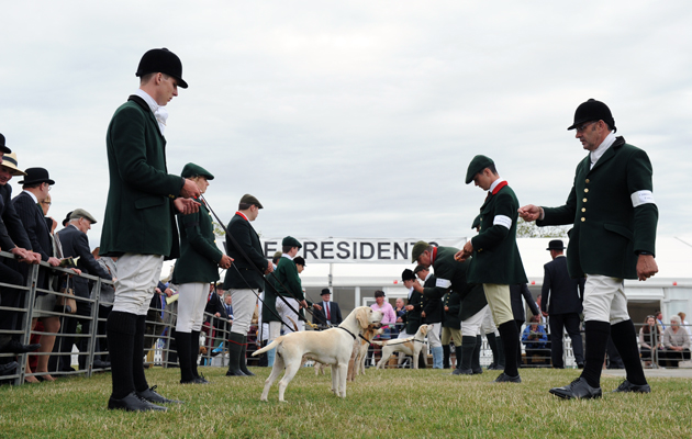 Beagles during The Peterborough Festival of Hunting at the Peterborough Show Ground in Cambridgeshire, UK on 22 July 2015