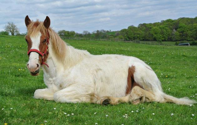 rescued foal dies