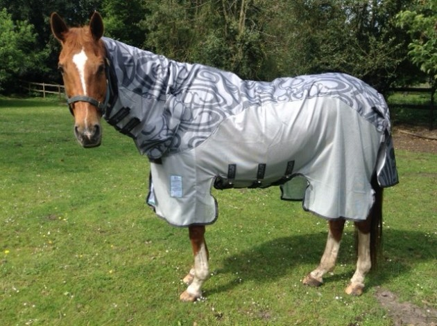 Amigo Vamoose Fly Rug With Waterproof Panel Review Horse Hound