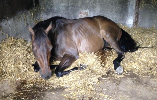 'Do I call the vet?' by Dr Richard Chapman: coping with colic