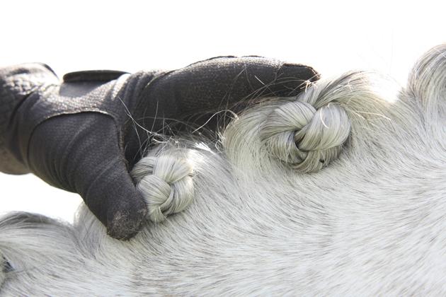 how to plait horse mane