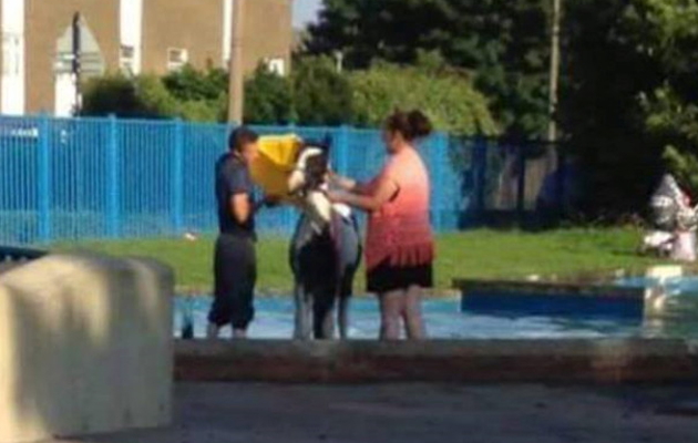 pony washed paddling pool