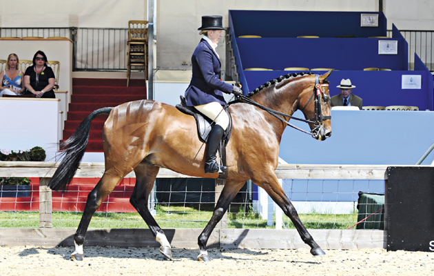 Petition and Katie Jerram, Riding Horse Championship