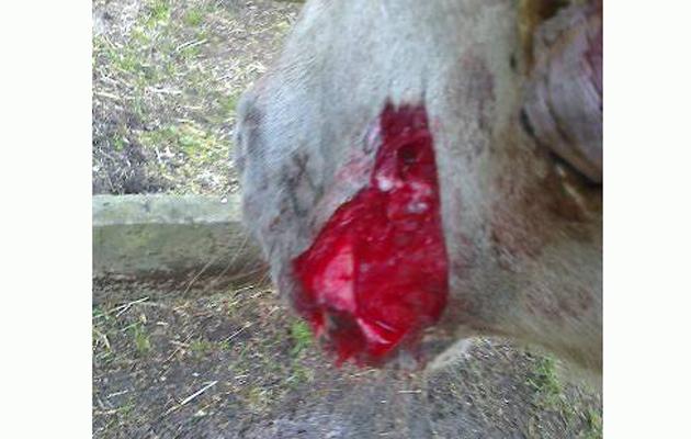 Dog attack 11.09.2015 02