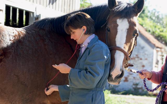 Vet-checking-horse