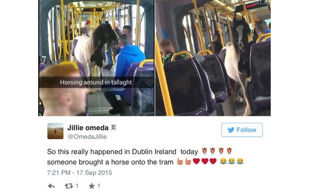 horse on tram