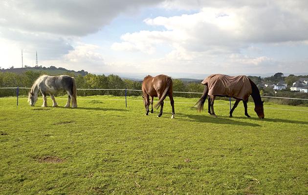 2 Case study horses grazing