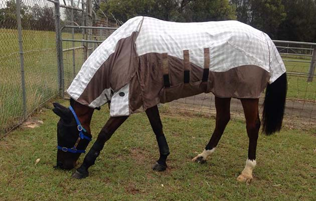 Hilly enjoying turnout in Australia's quarantine facilities
