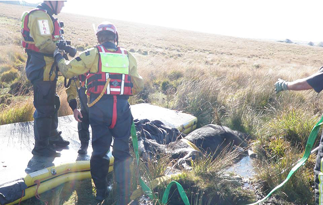 horse trapped in bog