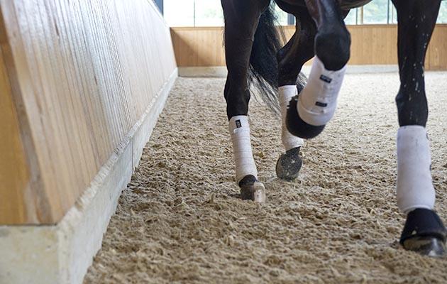indoor legs