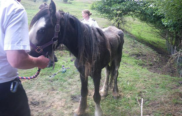 31 horses put down
