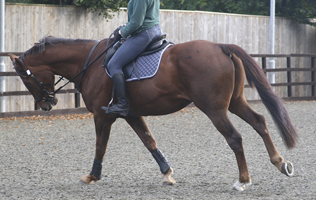 Nina Wareham S Physiotherapy Blog Equine Back Pain
