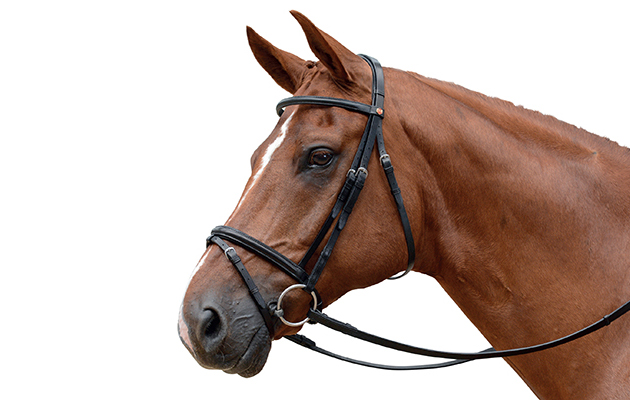 14 Unmissable Flash Bridles Horse Amp Hound