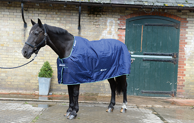Turnout Rugs To Suit Your Horse