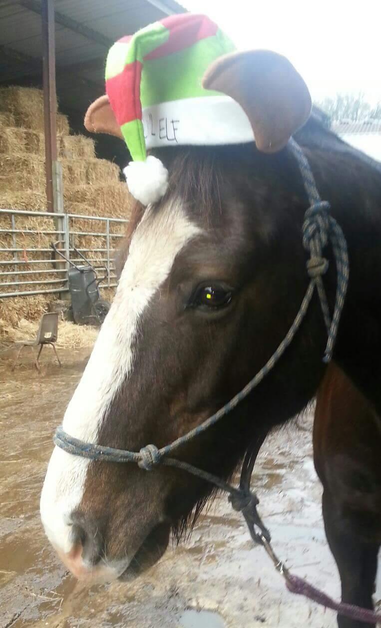 The Ultimate Equestrian Festive Fancy Dress Horse Amp Hound