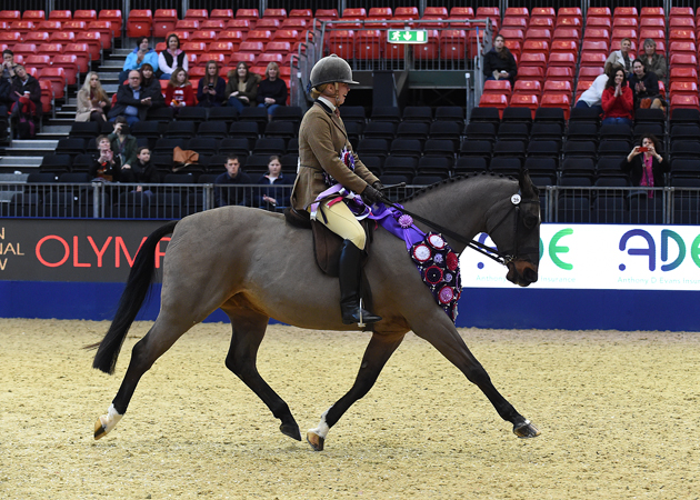 Alphaville of Oak VIII with Emily Proud Champion in the Ridden Anthony Evans Senior Showing & Dressage Ltd Home Produced Supreme Grand Final 2015 at The London International Horse Show 2015 at Olympia, London, UK on 18th December 2015
