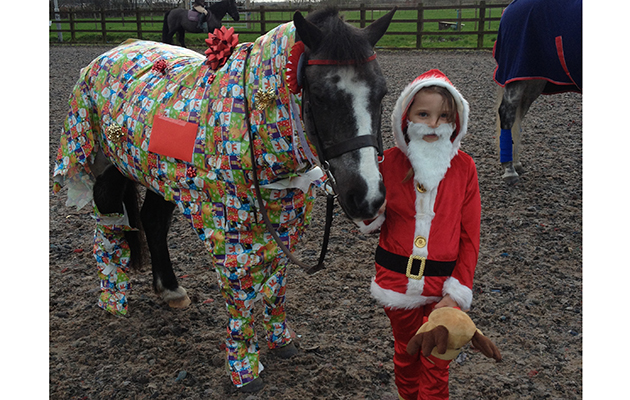 The Ultimate Equestrian Festive Fancy Dress Horse Amp Hound