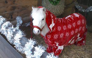 Onsie Trick Pony
