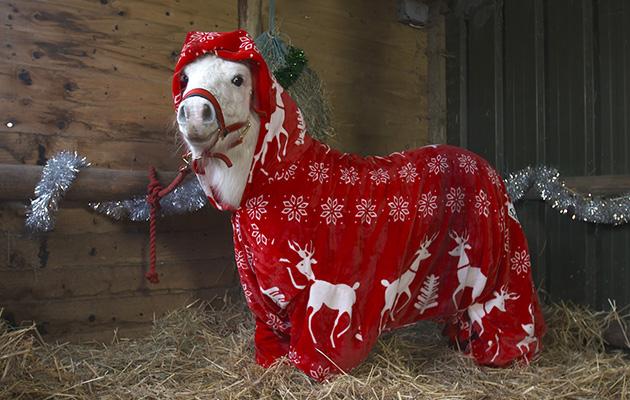 onsie trick pony - Christmas Horse