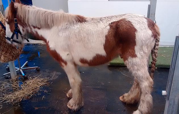 Winthorpe pony 1