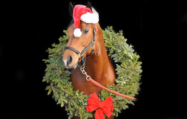 Christmas Horse Pictures.10 Christmas Events You Need To Enter With Your Horse Now