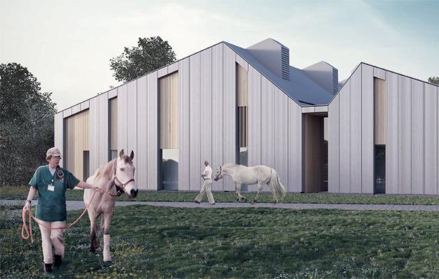 equine-artist-900x400
