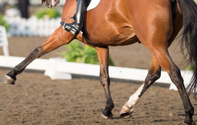 Nikki Crisp & Pasoa (299) - Horse Health Grand Prix Freestyle Championship - LeMieux National Dressage Championships 2014 - Stoneleigh Park, Warwickshire, United Kingdom - 21/09/2014 © Jon Stroud Media 2014, all rights reserved