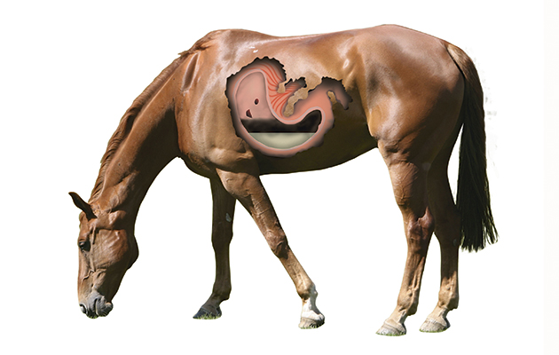 H&H Feed Week: Test your knowledge of the horse's ...