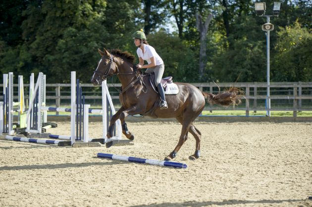 Polework exercises for horses