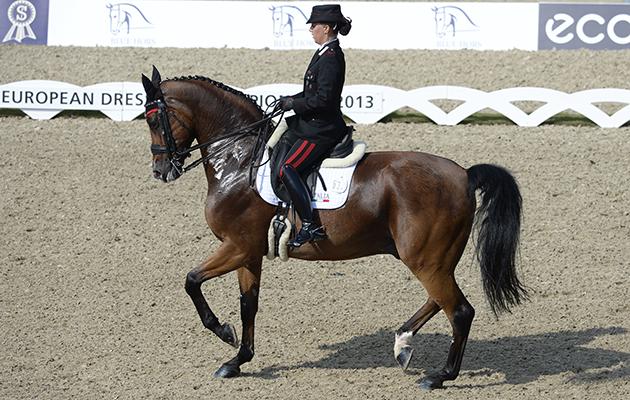 Grand prix dressage horse
