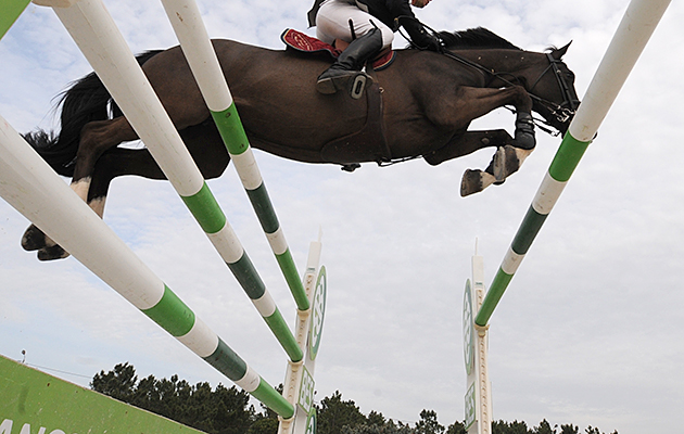 Horse and Hound festival of showjumping entries