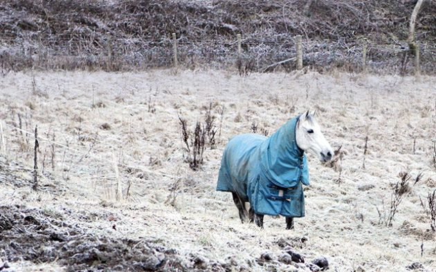 Carolyne Crozier's horse Evie aka Woodford Diamond H&H 24/02/2011 pub orig
