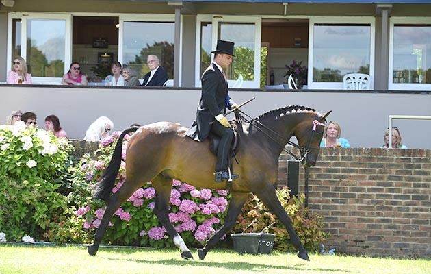 FLEETWATER XECUTIVE owned by  JORDAN COOK an exhibited by  JORDAN COOK; Champion in The Alexanders Horseboxes Supreme Hack Championship at The Longines Royal International Horse Show, at The All England Jumping Course, Hickstead, West Sussex, UK 01 August 2015