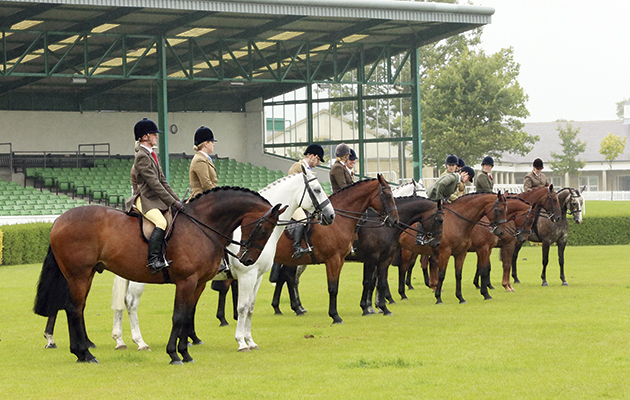 NPS Area 4, North Of England Show. Monday 25 August 2014 Great Yorkshire Showground, Harrogate. HOYS Small Hunter Qualifier line up lining