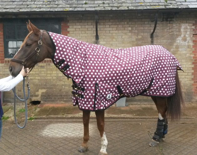 Derby House Medium Combo Polka Dot Turnout Rug Review Horse Hound