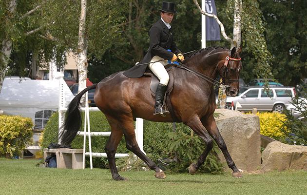 Broadstone Doulton Supreme horse RIHS 2005