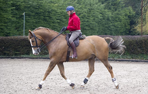 How to work your horse in an outline