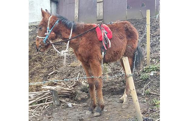foal bit2