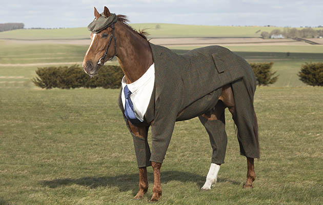 worlds-first-tweed-suit-for-horse.jpg