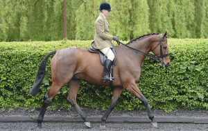 Katie Jerram with Barber Shop, ROR Ridden Hunters owned by HM The Queen, at the yard of Katie Jerram on 21 May 2013