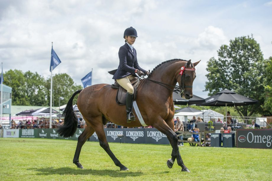 A beautifully turned out horse and rider knows how to win an intermediate showing class