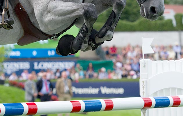 close up of show jumper legs over a fence