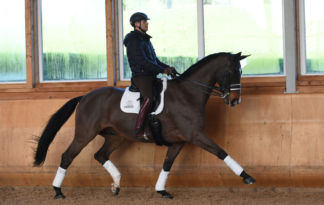 Carole Mortimer: 'Where are the British-bred horses?' *H&H