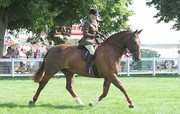 TOWER BRIDGE, owned by H M The Queen and ridden by Katie Jerram; Champion Ridden Hunter at The Royal Norfolk Show, near Norwich, Norfolk, UK on 1st July 2015